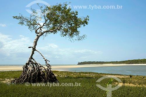 Vista de árvore na orla da Praia de Água Boa - Ilha de Marajó  - Salvaterra - Pará (PA) - Brasil