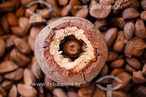 Detalhe de Castanha-do-Pará à venda no Mercado Ver-o-peso  - Belém - Pará (PA) - Brasil