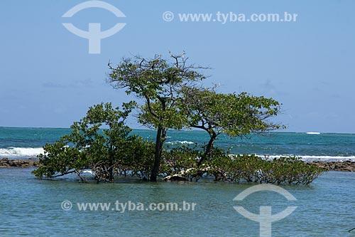 Árvore quase submersa na orla da Praia dos Carneiros  - Tamandaré - Pernambuco (PE) - Brasil