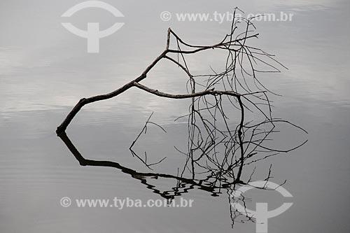 Galhos de árvores quase submersos no Lago Cuniã  - Porto Velho - Rondônia (RO) - Brasil