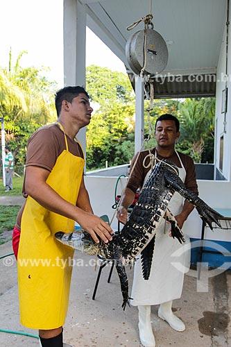 Preparação para abate do Jacaré-açu (Melanosuchus niger) para controle populacional na Reserva Extrativista do Lago Cuniã  - Porto Velho - Rondônia (RO) - Brasil