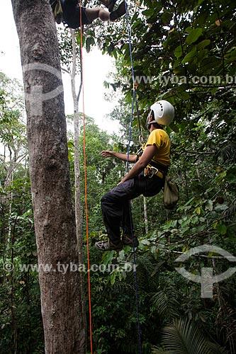 Praticante de escalada em árvores  - Manaus - Amazonas (AM) - Brasil