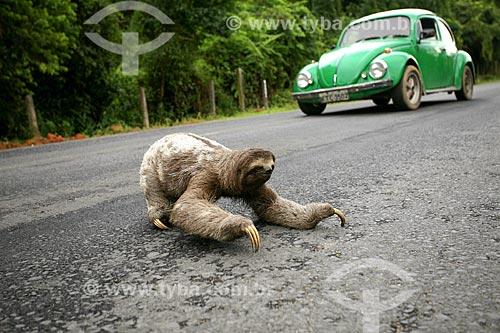 Bicho-preguiça atravessando estrada em Tinguá  - Nova Iguaçu - Rio de Janeiro (RJ) - Brasil