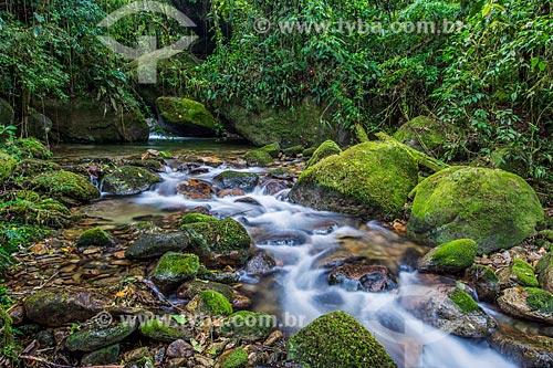 Poço das Bromélias no Parque Nacional da Serra dos Órgãos  - Teresópolis - Rio de Janeiro (RJ) - Brasil