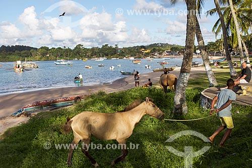 Cavalos na orla da Praia da Coroinha  - Itacaré - Bahia (BA) - Brasil