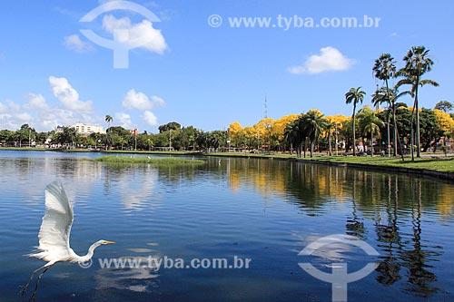 Garça-branca-grande (Ardea alba) no Parque Sólon de Lucena - também conhecido simplesmente como Lagoa  - João Pessoa - Paraíba (PB) - Brasil