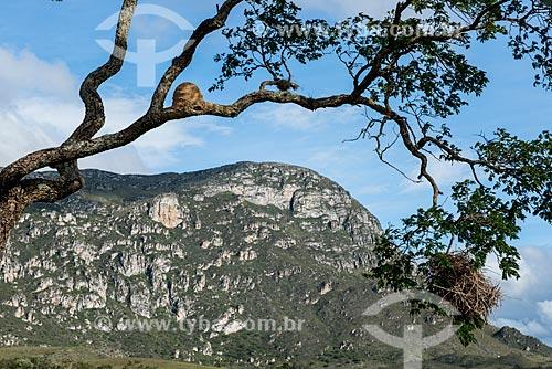Dois tipos diferentes de ninho na mesma árvore  - Santana do Riacho - Minas Gerais (MG) - Brasil
