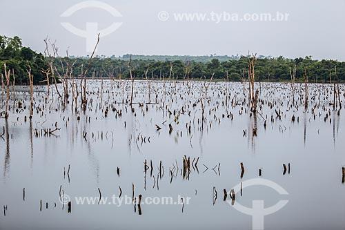 Árvores submersas pelo lago da Usina Hidrelétrica Luiz Eduardo Magalhães (2002) - também conhecida como Usina Hidrelétrica de Lajeado  - Palmas - Tocantins (TO) - Brasil