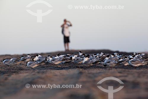 Bando de andorinhas-do-mar (Sterna hirundo) na orla da praia de Regência após o rompimento de barragem de rejeitos de mineração da empresa Samarco em Mariana (MG) com homem ao fundo  - Linhares - Espírito Santo (ES) - Brasil