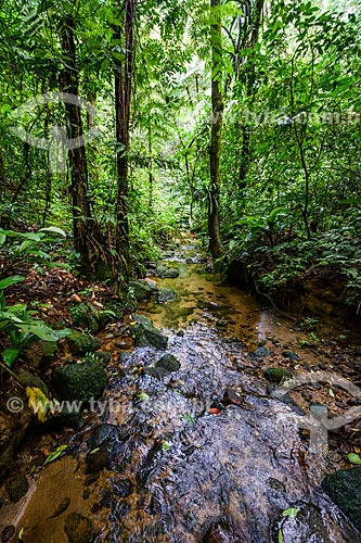 Trilha para o Açude do Camorim no Núcleo Camorim - Sub-sede do Parque Estadual da Pedra Branca  - Rio de Janeiro - Rio de Janeiro (RJ) - Brasil
