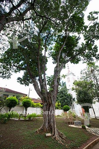 Pau-Brasil (Caesalpinia echinata Lam.) no campus da Universidade Federal de São João del-Rei  - São João del Rei - Minas Gerais (MG) - Brasil