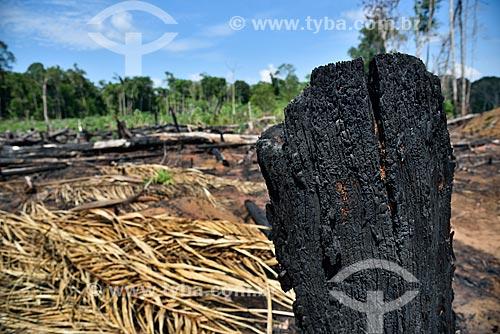 Detalhe de queimada na Floresta Amazônica às margens da Rodovia AM-352  - Novo Airão - Amazonas (AM) - Brasil