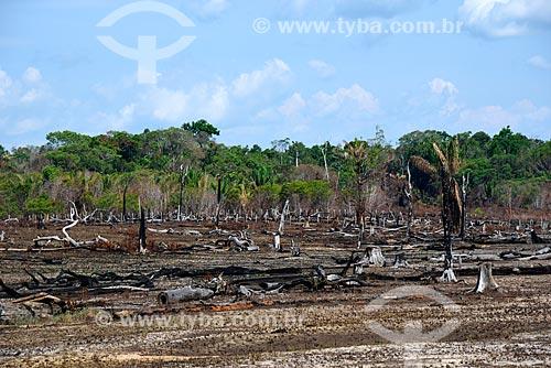 Queimada na Floresta Amazônica às margens da Rodovia AM-352  - Novo Airão - Amazonas (AM) - Brasil