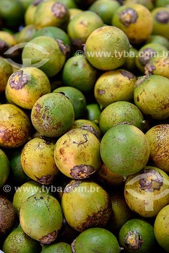 Tucumã (Astrocaryum aculeatum) - também conhecida como Acaiúra ou Tucum - à venda Feira da Manaus Moderna  - Manaus - Amazonas (AM) - Brasil
