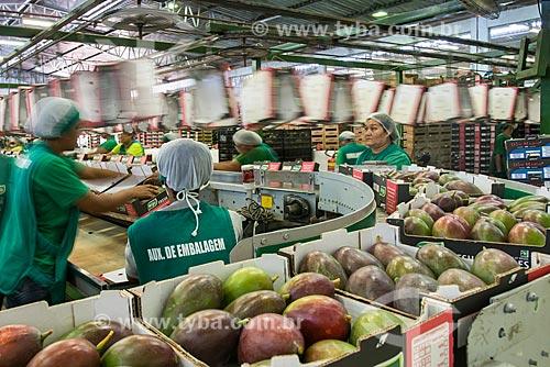 Embalagem de mangas para exportação - Packing House - Projeto Nilo Coelho - Vale do São Francisco  - Petrolina - Pernambuco (PE) - Brasil