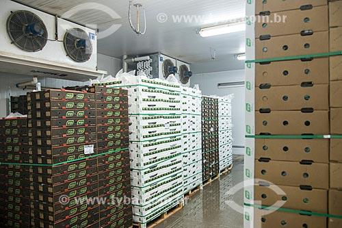Paletes com caixas de mangas para exportação na câmera fria do Packing House - Projeto Nilo Coelho - Vale do São Francisco  - Petrolina - Pernambuco (PE) - Brasil