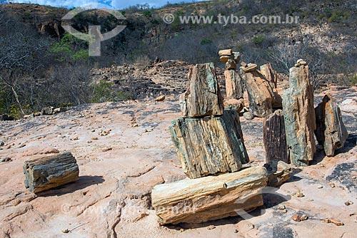 Geossítio Floresta Petrificada do Cariri - no Geoparque Araripe  - Missão Velha - Ceará (CE) - Brasil