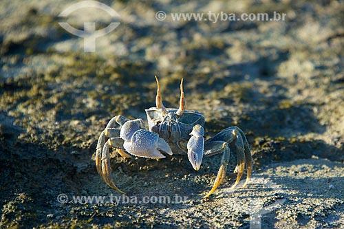 Caranguejo no Arquipélago das Quirimbas  - Província de Cabo Delgado - Moçambique
