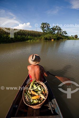 Colheita e transporte de milho - várzea do Rio Amazonas  - Iranduba - Amazonas (AM) - Brasil