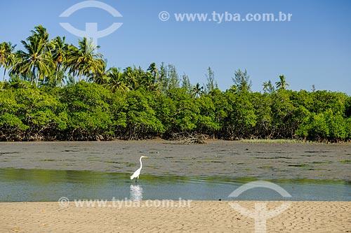 Garça-branca-grande (Ardea alba) na Restinga da Marambaia - área protegida pela Marinha do Brasil  - Rio de Janeiro - Rio de Janeiro (RJ) - Brasil