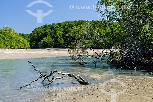 Manguezal da Restinga da Marambaia - área protegida pela Marinha do Brasil  - Rio de Janeiro - Rio de Janeiro (RJ) - Brasil