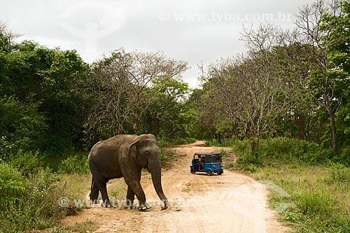 Elefante e tuk-tuk na região do antigo Império Cingalês - ou Sinhala  - Sri Lanka