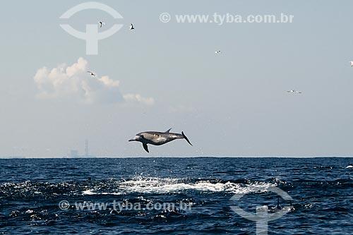 Golfinho-nariz-de-garrafa (Tursiops truncatus) saltando na orla do Sri Lanka  - Sri Lanka