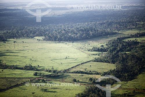 Foto aérea de geoglifo  - Rio Branco - Acre (AC) - Brasil