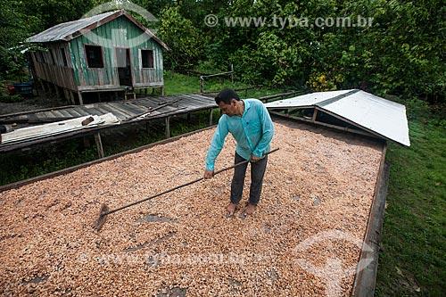 Produtor durante a secagem de cacau nativo na região do Rio Madeira  - Amazonas (AM) - Brasil