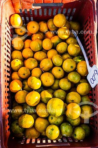 Detalhe de tangerina (Citrus reticulata) - também conhecida como bergamota, vergamota ou mexerica - à venda na Feira Orgânica da Lagoa da Conceição  - Florianópolis - Santa Catarina (SC) - Brasil