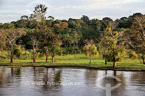 Floresta Amazônica às margens do Rio Amazonas  - Careiro da Várzea - Amazonas (AM) - Brasil