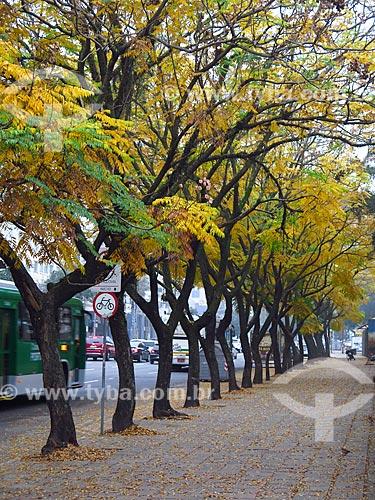 Vista da Avenida Loureiro da Silva durante o inverno  - Porto Alegre - Rio Grande do Sul (RS) - Brasil