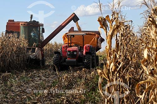 Descarga de milho durante a colheita mecanizada  - Mirassol - São Paulo (SP) - Brasil