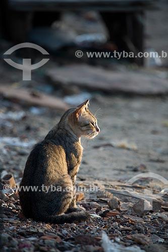 Detalhe de gato na cidade da Raposa  - Raposa - Maranhão (MA) - Brasil