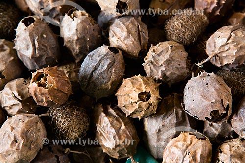 Detalhe de buchinha (Luffa operculata) à venda no Mercado Central de São Luís  - São Luís - Maranhão (MA) - Brasil