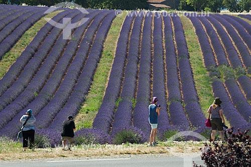 Turistas fotografando os campos de lavanda próximo à cidade de Valensole  - Valensole - Departamento de Alpes da Alta Provença - França