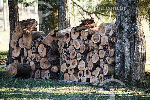 Lenha de cedro-cheiroso (Cedrela odorata) na Colônia Italiana do Mergulhão  - São José dos Pinhais - Paraná (PR) - Brasil