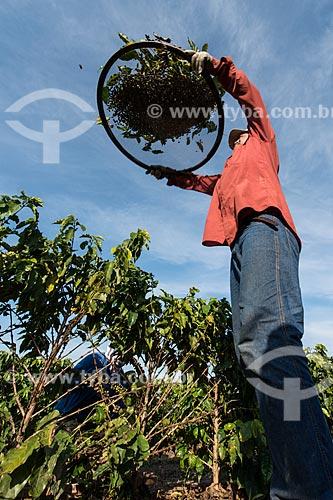 Abanação de café de colheita manual  - Garça - São Paulo (SP) - Brasil