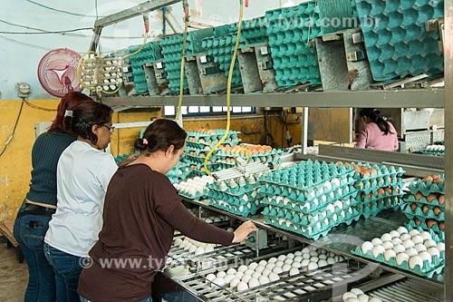 Embalagem de ovos em avícola  - Gália - São Paulo (SP) - Brasil