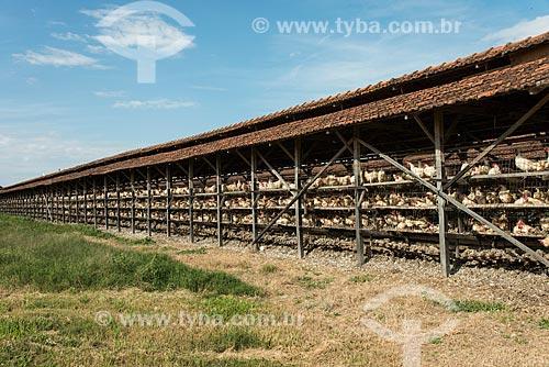 Avícola - Galpão de criação de aves de postura  - Gália - São Paulo (SP) - Brasil