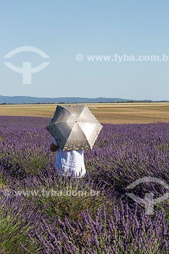 Turista observando os campos de lavanda próximo à cidade de Valensole  - Valensole - Departamento de Alpes da Alta Provença - França