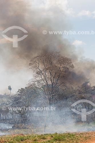 Incêndio às margens da Avenida Perimetral Norte (GO-070) durante o período de seca  - Goiânia - Goiás (GO) - Brasil