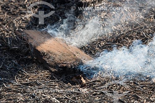 Detalhe de incêndio às margens da Avenida Perimetral Norte (GO-070) durante o período de seca  - Goiânia - Goiás (GO) - Brasil