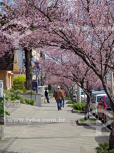 Cerejeiras em calçada da cidade de Canela  - Canela - Rio Grande do Sul (RS) - Brasil