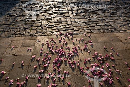 Chão coberto por flores de Ipê Rosa (Tabebuia heptaphylla) na Praça Tarso de Camargo - também conhecida como Praça do Coreto  - Goiás - Goiás (GO) - Brasil