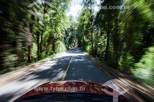 Carro em movimento na Província de Osorno  - Província de Osorno - Chile