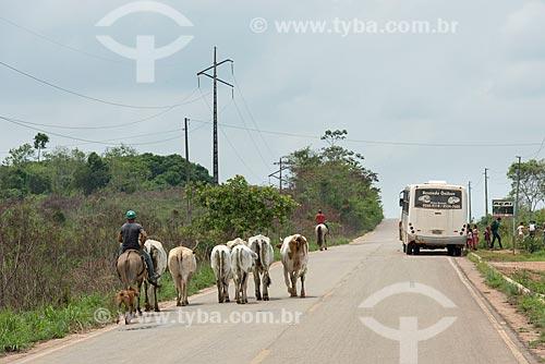 Boiadeiro conduzindo o gado e ônibus escolar na Rodovia PA-279  - Tucumã - Pará (PA) - Brasil