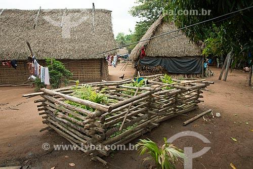Mudas de açai na Aldeia Moikarakô - Terra Indígena Kayapó - protegida contra as crianças e animais  - São Félix do Xingu - Pará (PA) - Brasil