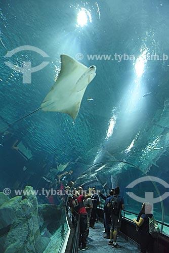 Visitantes observando Arraia no AquaRio - aquário marinho da cidade do Rio de Janeiro  - Rio de Janeiro - Rio de Janeiro (RJ) - Brasil