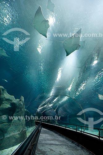 Arraias no AquaRio - aquário marinho da cidade do Rio de Janeiro  - Rio de Janeiro - Rio de Janeiro (RJ) - Brasil